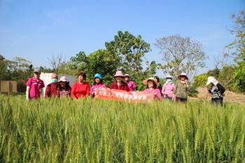 西莊社區 採紅藜 初體驗 談笑話農趣  紅藜大餐 現場做 味蕾香 共享田園樂
